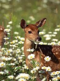 deter deer in the garden hgtv