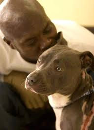 rent a pit pit bull saves family from but no apartments will rent to them