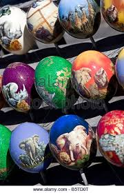 painted ostrich eggs for sale ostrich egg stock photos ostrich egg stock images alamy
