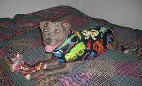 christian sweaters 13 best pibble sweaters images on sweaters christian