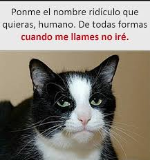 Gato Meme - lo mismo que hace mi gato meme subido por javplay1000 memedroid