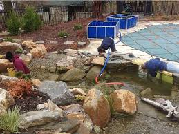 Backyard Gold How To Make A Low Maintenance Backyard Pond In Cranford Nj Images