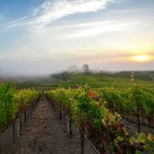healdsburg wineries u0026 more in russian river valley sunset