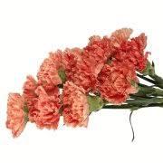Wholesale Carnations Carnation Eflowy Fresh Cut Flowers Wholesale Carnations 300
