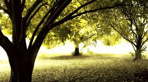 high definition amazing nature tree backgrounds widescreen and hd
