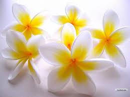 white flower flower wallpaper white flowers wallpaper 1024x768 garden