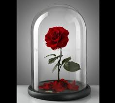 preserved roses in glass preserved roses in glass suppliers and