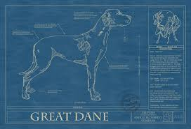 great dane animal blueprint company great dane dog blueprint