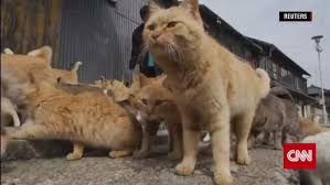 cat island welcome to japan s cat island cnn video