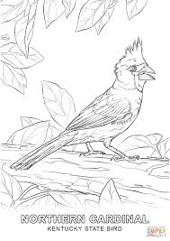 kentucky state bird coloring page free printable coloring pages
