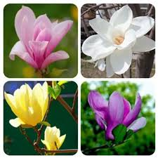 Fragrant Flowers For Garden - seeds picture more detailed picture about 100pcs