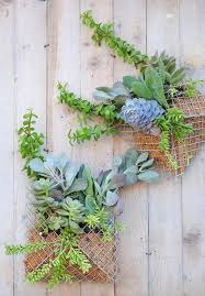 best 25 succulent wall planter ideas on pinterest succulent