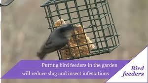 alan titchmarsh u0027s tips on growing heathers garden life u0026 style