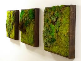 walls and trends moss walls the newest trend in biophilic interiors überwell