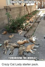 Crazy Cat Lady Memes - today thissidewalk tomorrow the world imtmecenler memecenter com