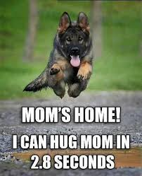 Funny German Shepherd Memes - everything mixed 12 reasons why you should never own a german