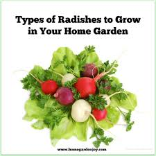 Types Of Vegetable Gardening by Types Of Radishes For The Home Garden U2013 Home Garden Joy