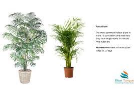 indoor plants india indoor plants enhancing workplace envoirnment