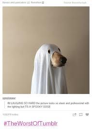 Doge Meme Tumblr - llamas and pancakes flomation source theronhumph spookasaur im