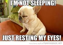 Tired Meme - dog meme monday funny dog meme bullwrinkles dog blog mondays