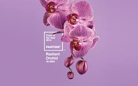 graphics radiant orchid pantone color of the year 2014