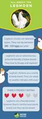 8 best images about chicken breeds on pinterest chicken eggs