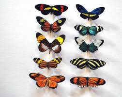 Butterfly Kitchen Decor Butterfly Moth Magnets Rainforest Butterflies Set Of 12