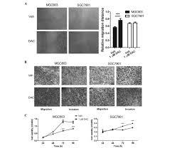 dna methylation inhibitor decitabine promotes mgc803 gastric