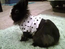 how do you potty train a rabbit