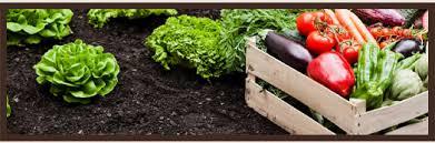 valley center garden design maintenance vegetable growing