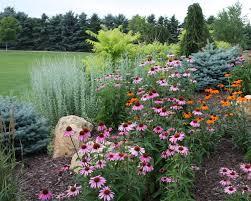 landscaping trees and shrubs ideas design ideas u0026 decors