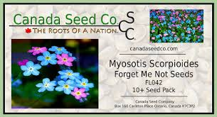 forget me not seed packets blue pink forget me not flower seeds myosotis scorpioides