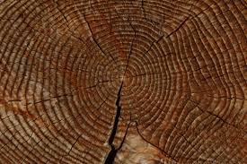 wood tree rings images My top five reasons for believing in a young earth part 3 of 6 jpg