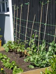 How To Make Trellis For Peas Moose Now U0026 Gwen