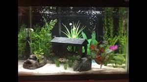 Fish tank decoration ideas plus aquarium decorations tree plus