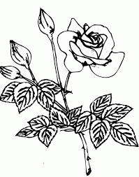 rose coloring sheets printables flowers coloring pages free