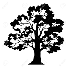 White Oak Tree Drawing Oak Tree Pictogram Black Silhouette And Contours Isolated On