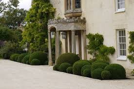 Topiary Cloud Trees - cloud pruning box google search garden pinterest gardens
