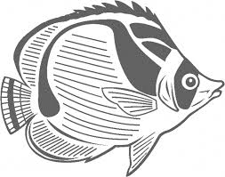 beautiful butterfly fish coloring pages rainbow fish coloring