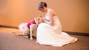 heartwarming photo shows service dog calming bride before wedding