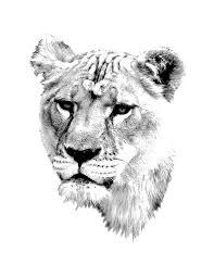 lioness female lion digital wildlife engraving image