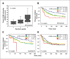 punctate lc3b expression is a common feature of solid tumors and