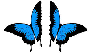 butterfly ulysses stickers car stickers