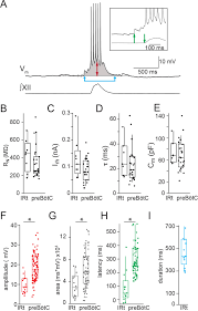 dbx1 precursor cells are a source of inspiratory xii