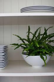 good houseplants for low light best houseplants 9 indoor plants for low light gardenista