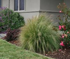 design great landscaping with tall grass plants