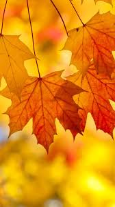 pumpkin screensavers best 25 fall leaves wallpaper ideas on pinterest fall wallpaper
