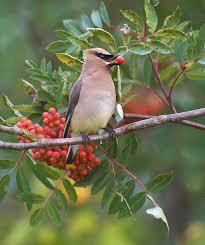 The Backyard Bird Company - backyard wildlife the photonaturalist