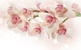 white orchid flower 29 attractive white orchid flowers pictures weneedfun