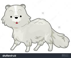 polar fox clipart animated pencil and in color polar fox clipart